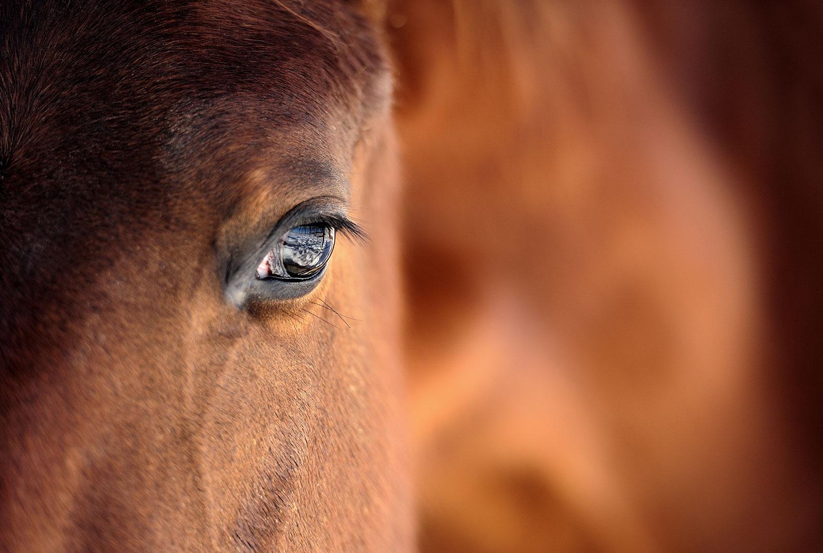 Articolo V Training for business - Cavallo